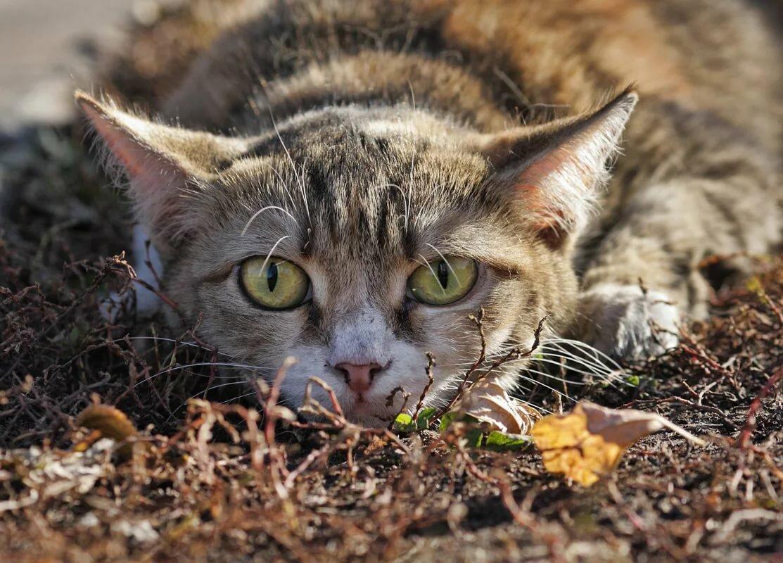 Картинки уличные кошки