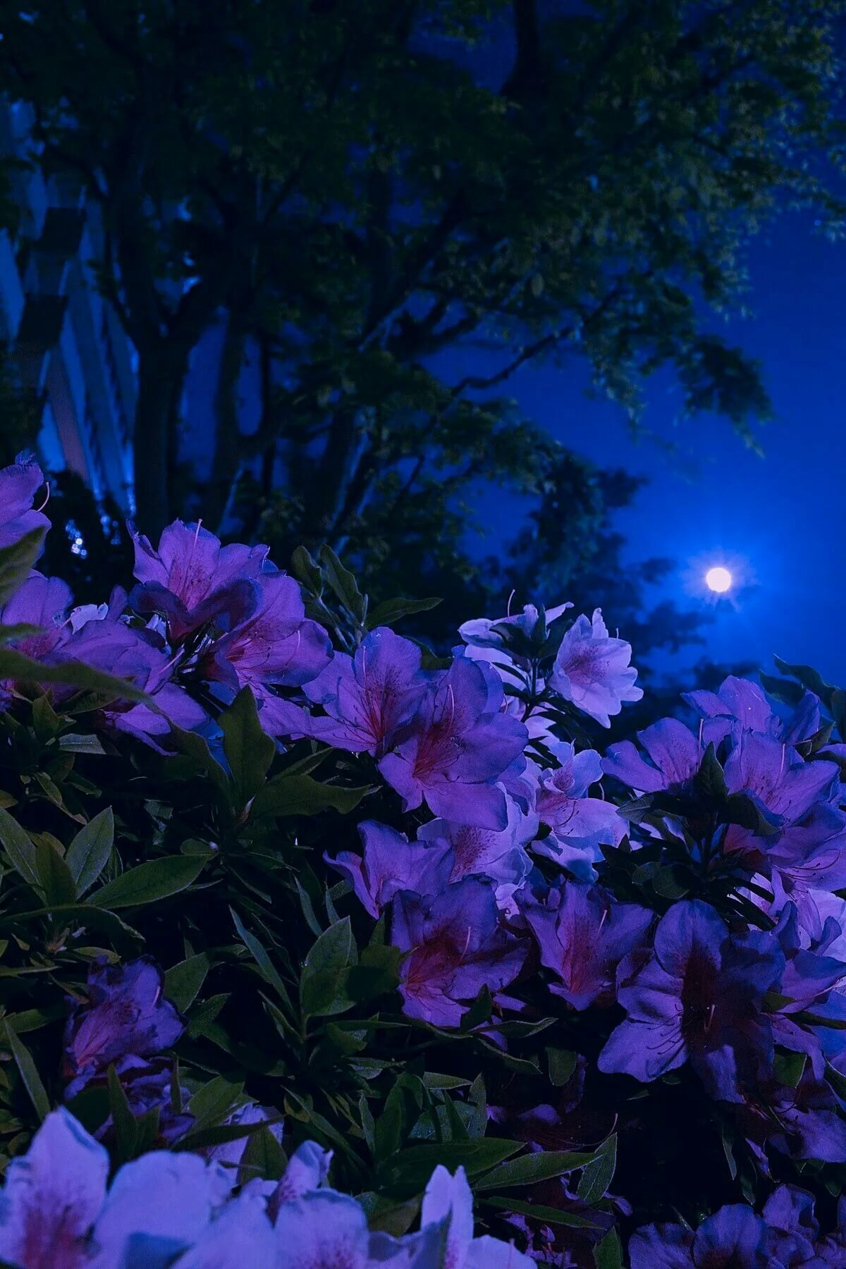 Фото цветов которые распускаются ночью