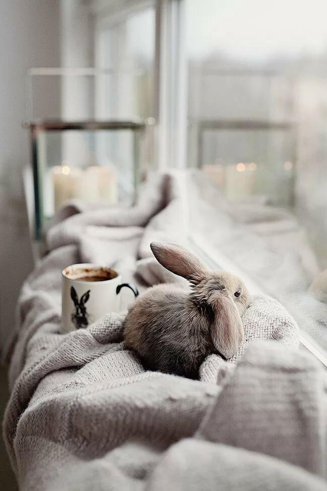 картинка зайцы на диване такой