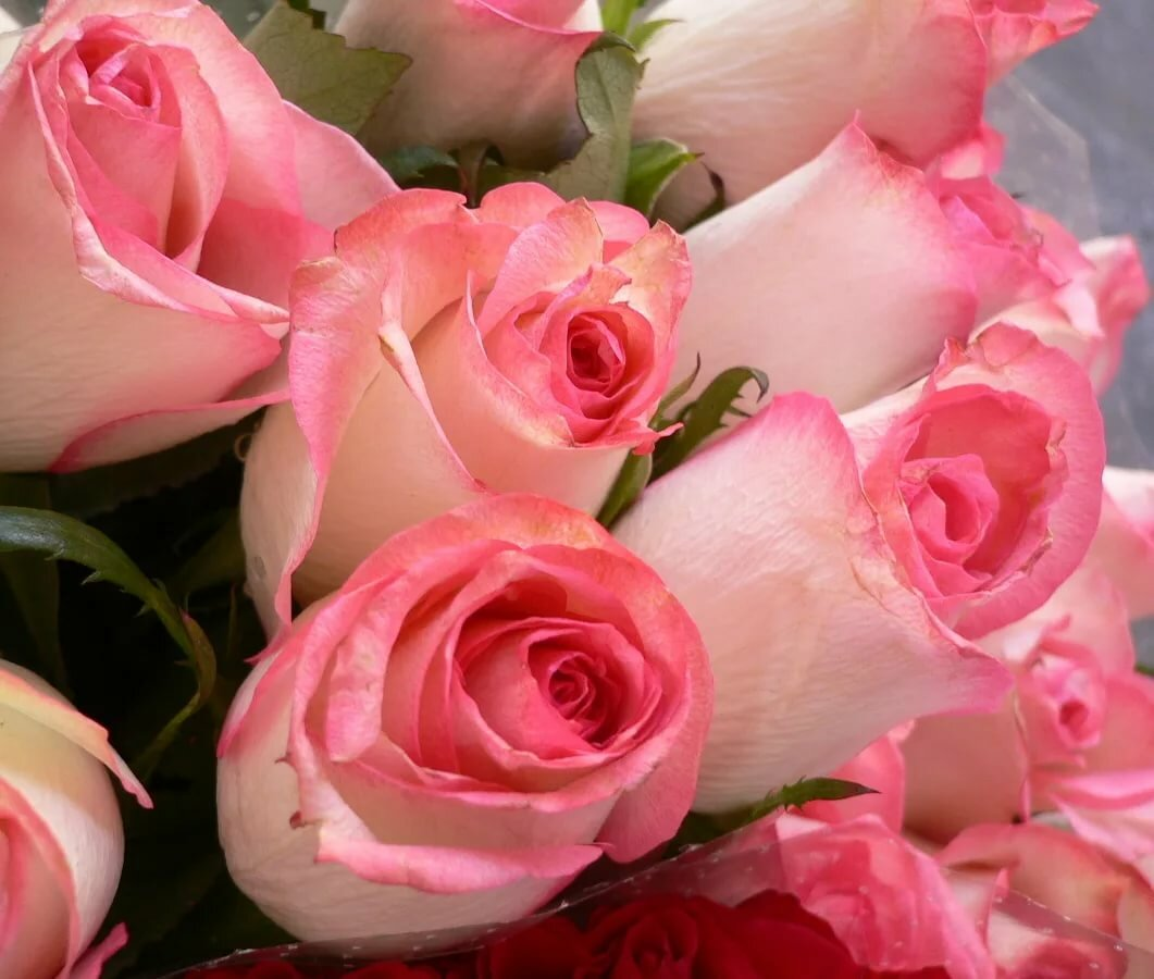 что розовые розы по краям фото букетов большинстве