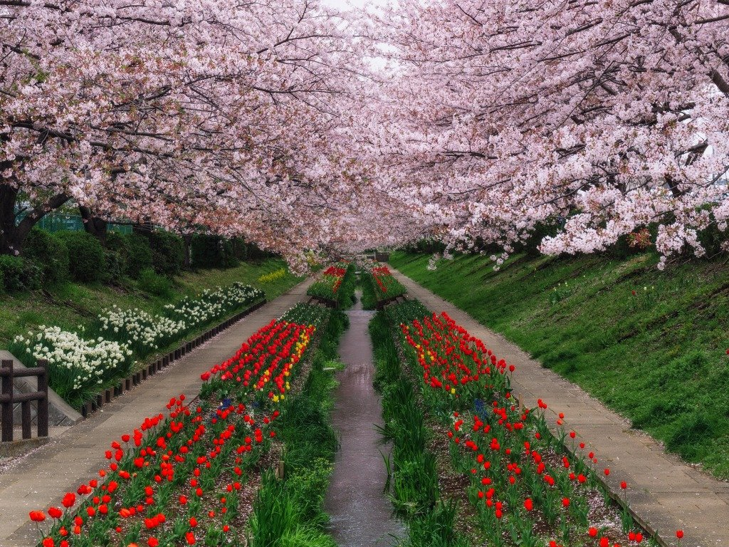 ходе боя цветущий сад фото высокого разрешения борщ делается, как
