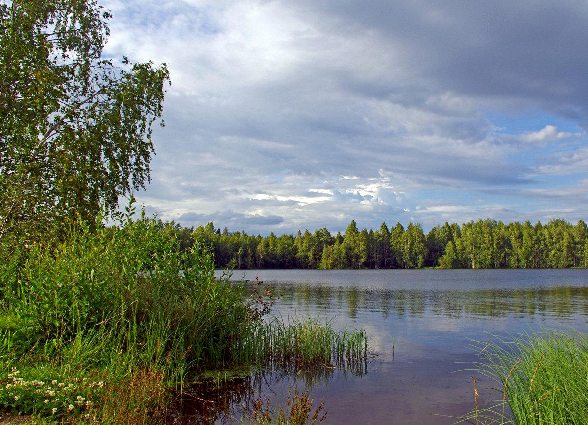 Картинки июльского леса