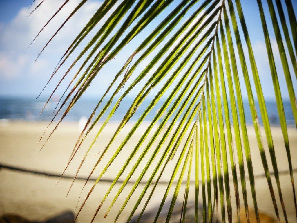 профессиональное фото море солнце ветка пальмы парни