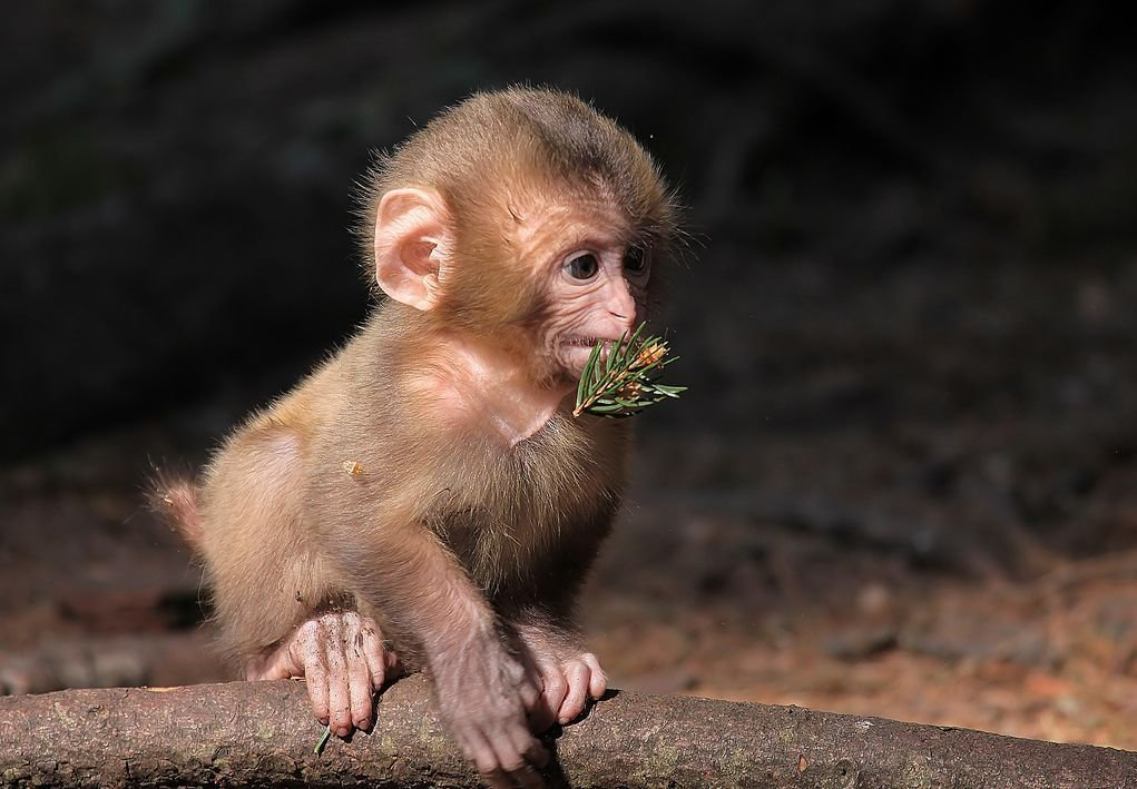 Картинки красивая обезьяна
