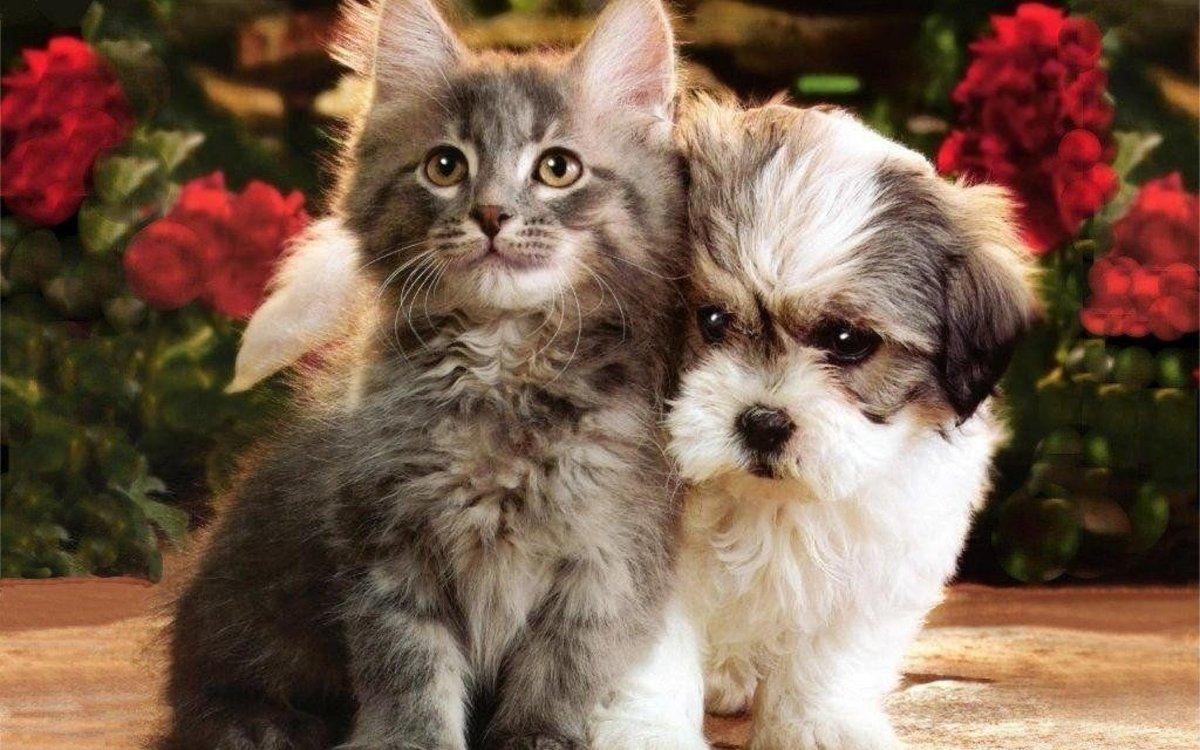 Картинка смешные котенок и щенок