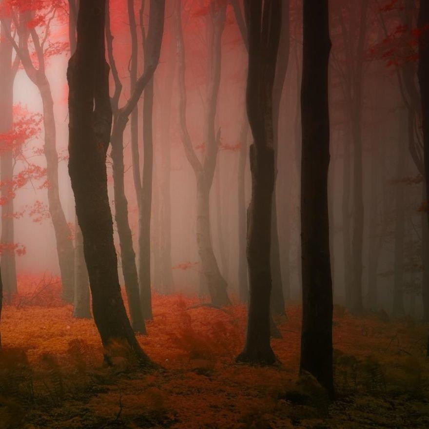 Если во сне вы видите дерево в молодой листве – значит, все ваши планы и мечты исполняются.