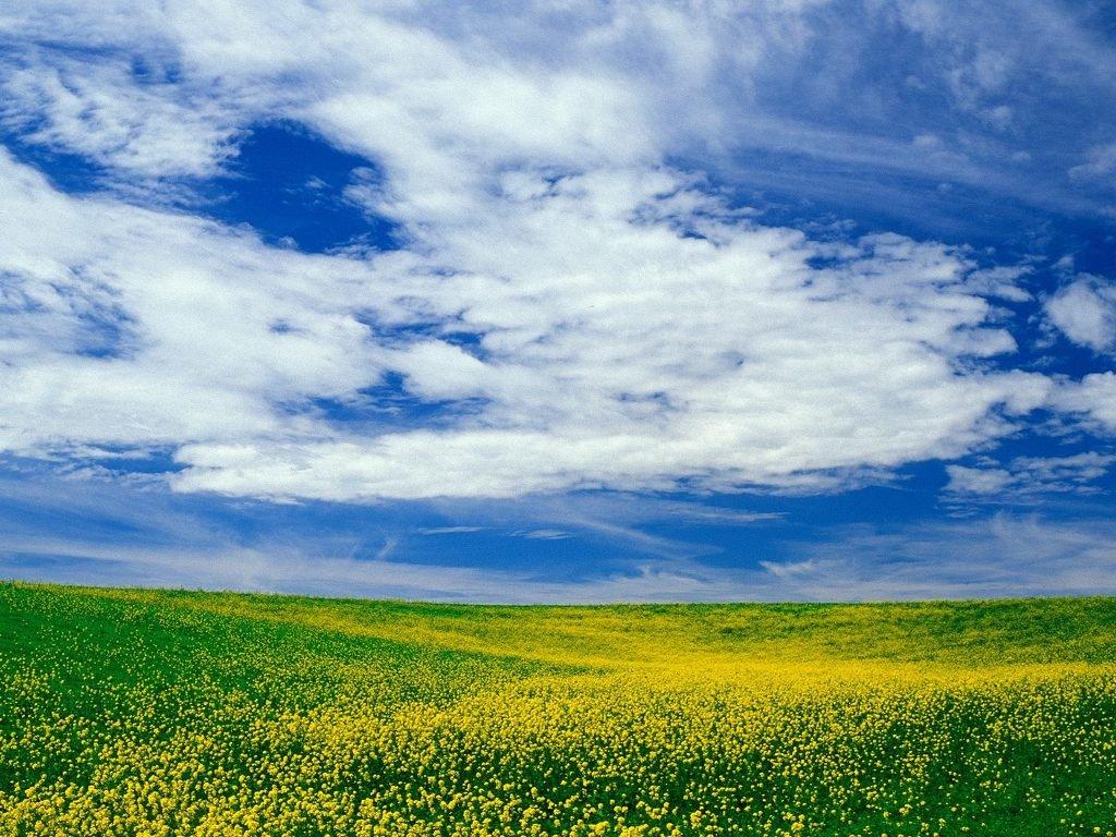 картинки голубое небо природа сахарном листе более