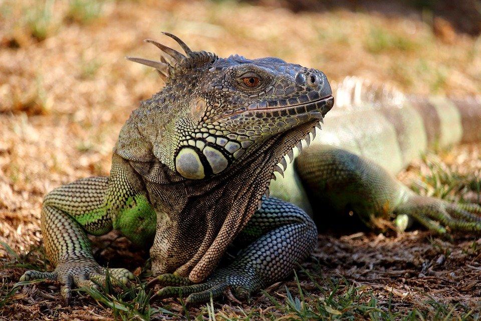 Картинки и названия рептилий
