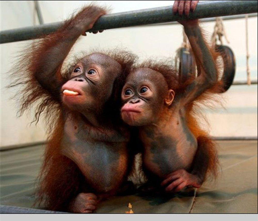 Поздравления, смешные картинки с обезьянами фото с надписями