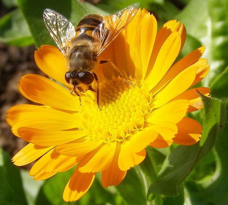 Картинки с цветами и пчелками