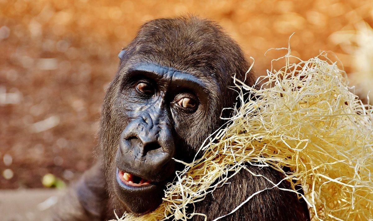 Смешные обезьяны картинки фото при