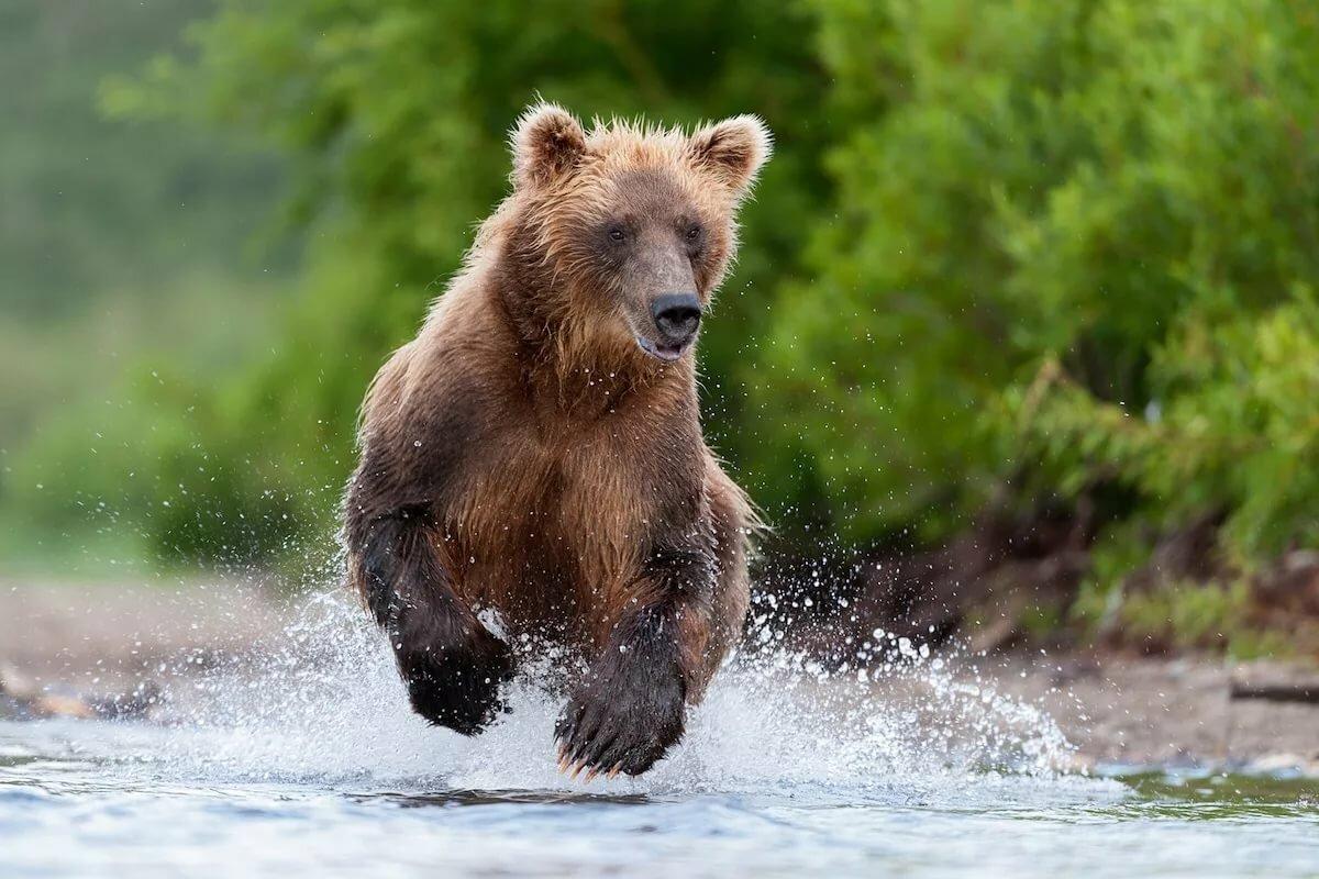 Медведка крот фото накинулись гимнастку