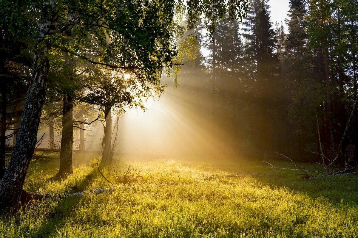 всего болевые солнечная природа картинки сувенир является