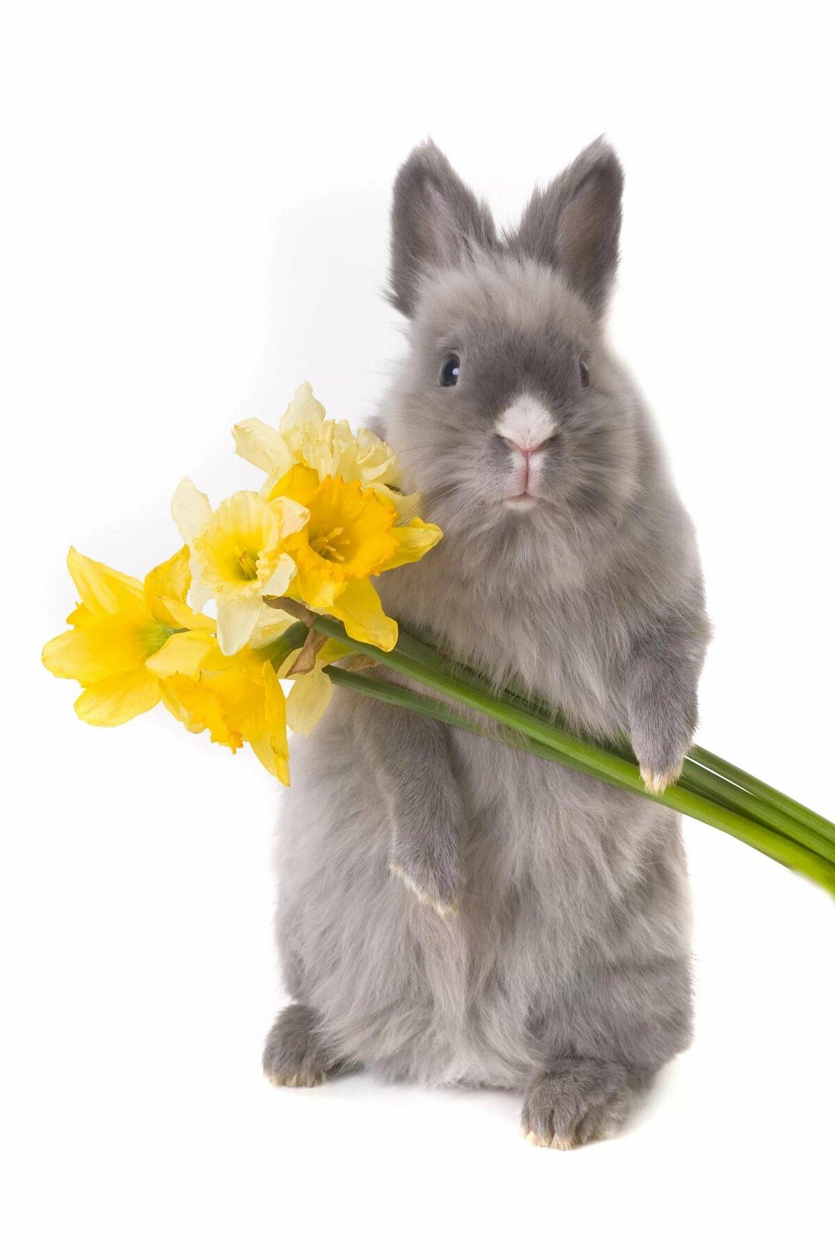 пожелание кролиководу в день рождения продаже чаще