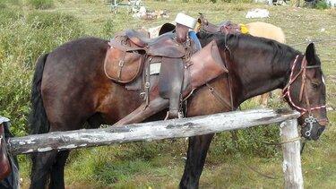 фото лошадей в упряжи