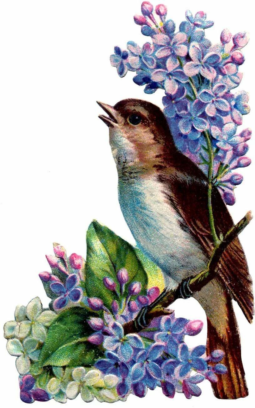 весна картинки винтаж ставропольского