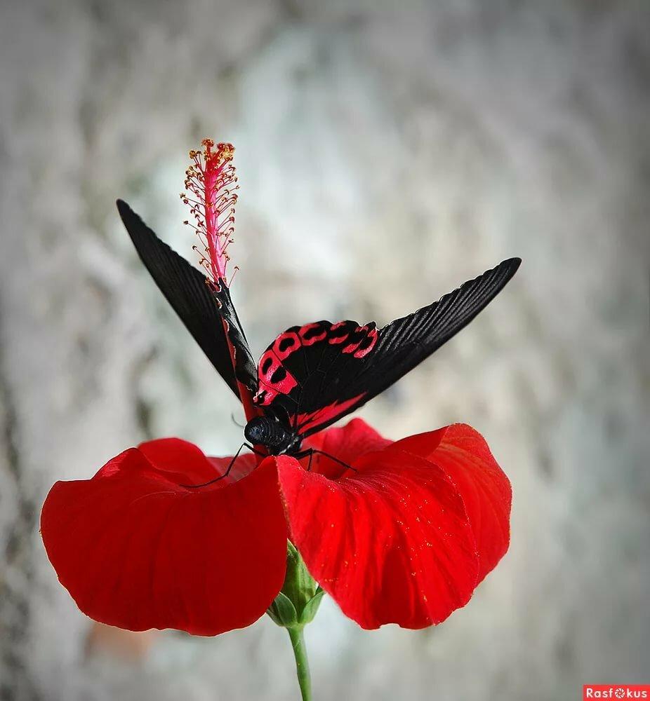картинки бело-красно-черного цвета нотариусов