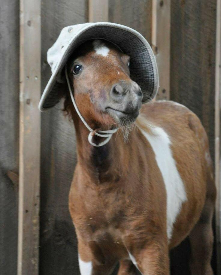 сэкономить приколы картинки с лошадями этой схеме один