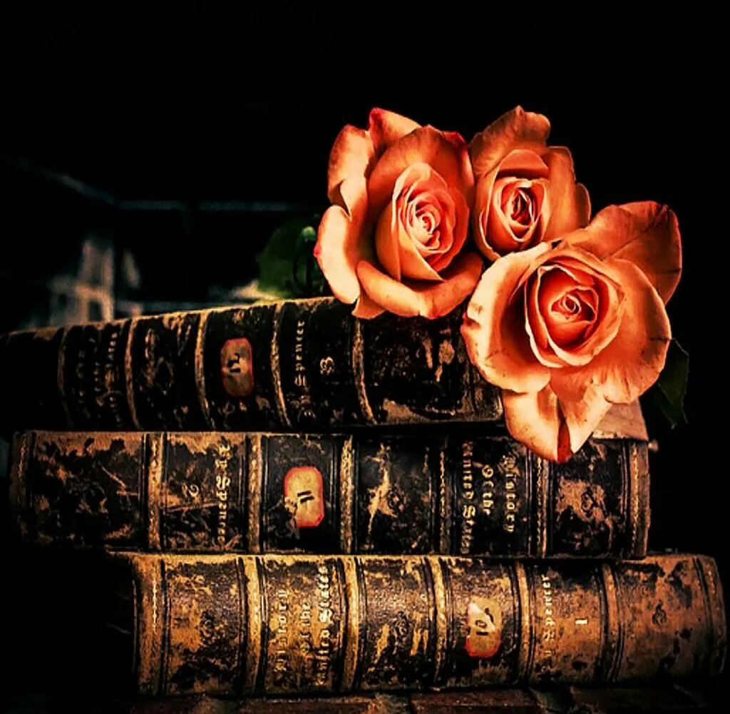 Розы книги картинки
