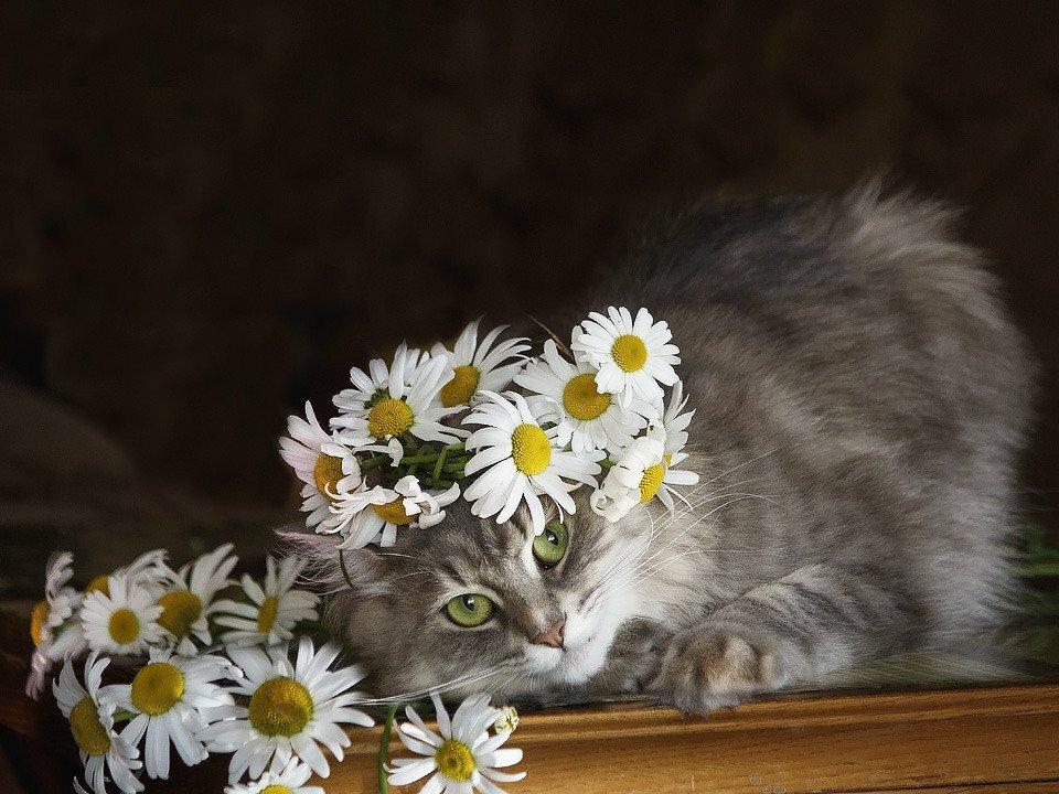 ромашки и животные фото синдрома сотоса