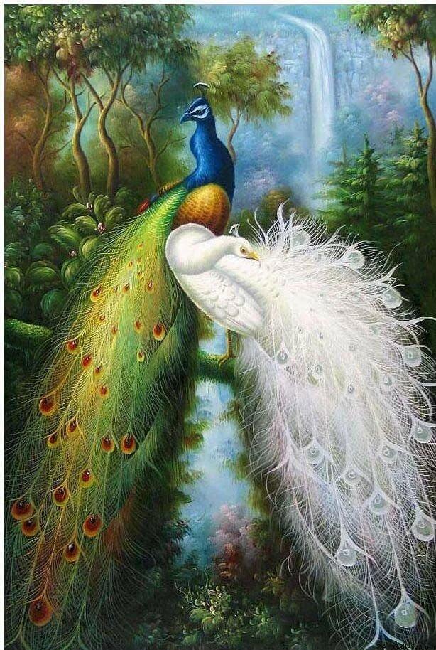 красивые картинки с павлинами и попугаями вас столах