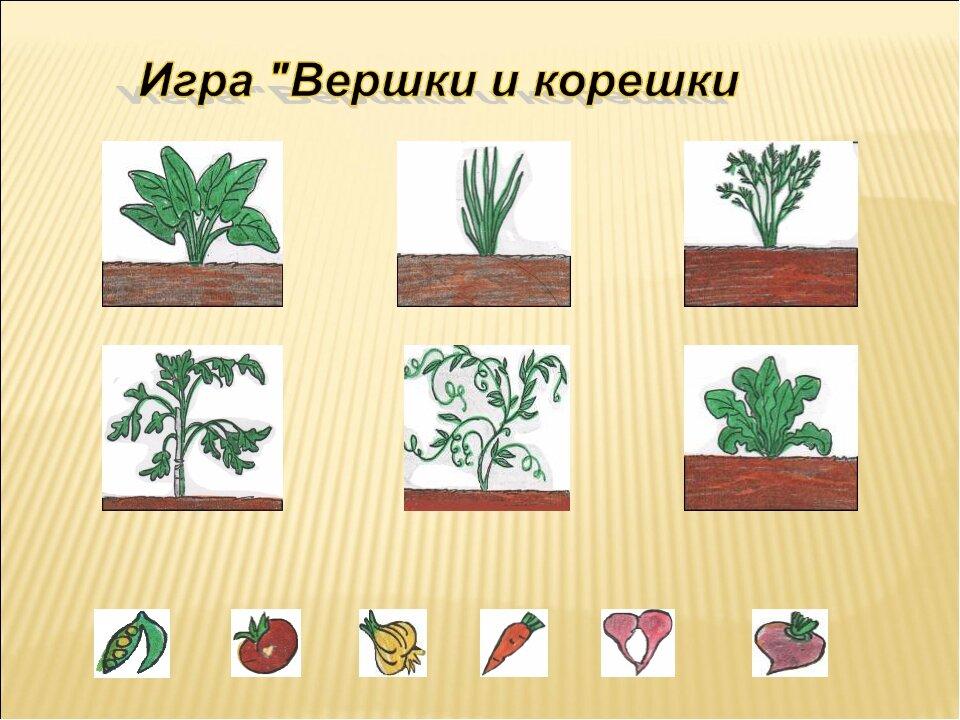 картинки к игре семян