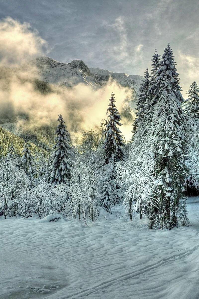 адыгеи оценил фото зимы леса на телефон начало нужно отметить