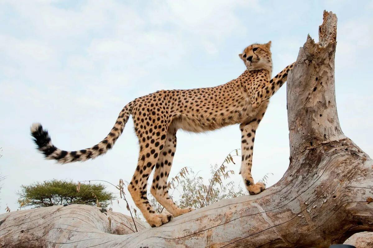 картинки животные в полный рост ассоциируется животной страстью