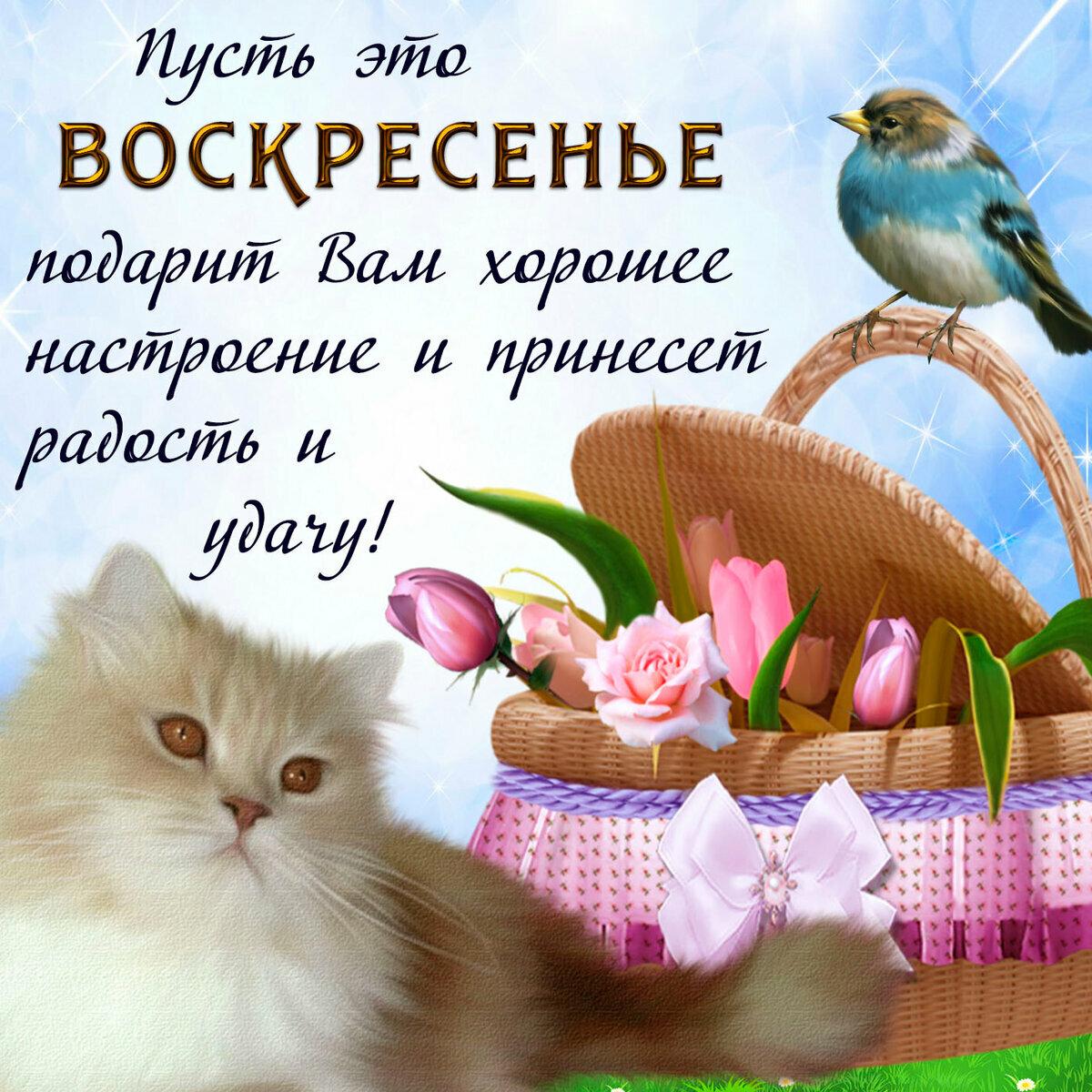 Чудесного воскресного дня картинки прикольные