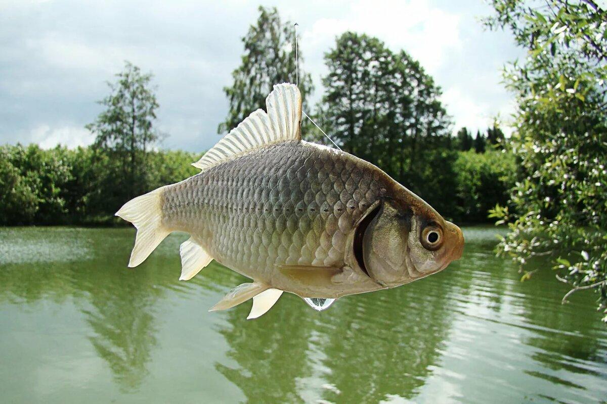 картинка рыбу мне