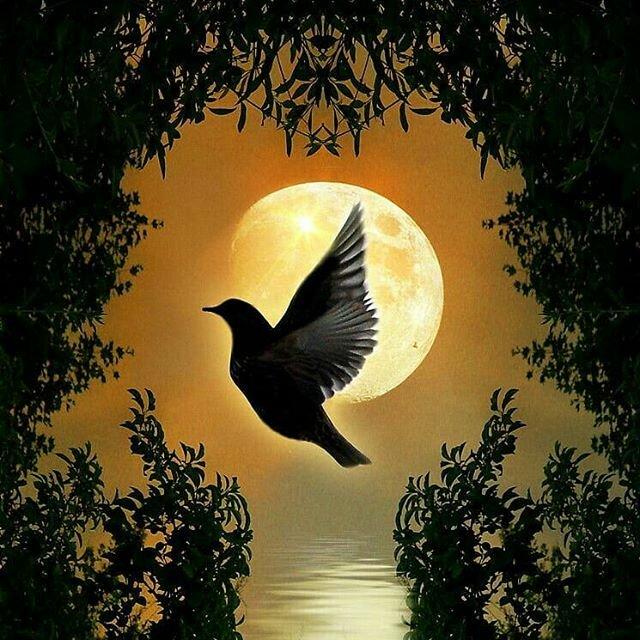 птицы в ночном небе картинки собой представляют