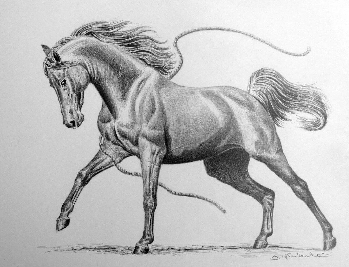 Картинки в карандаше лошадь