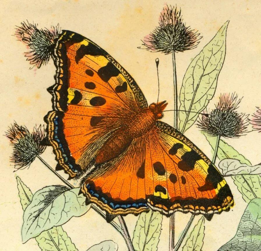 Картинки советские бабочки