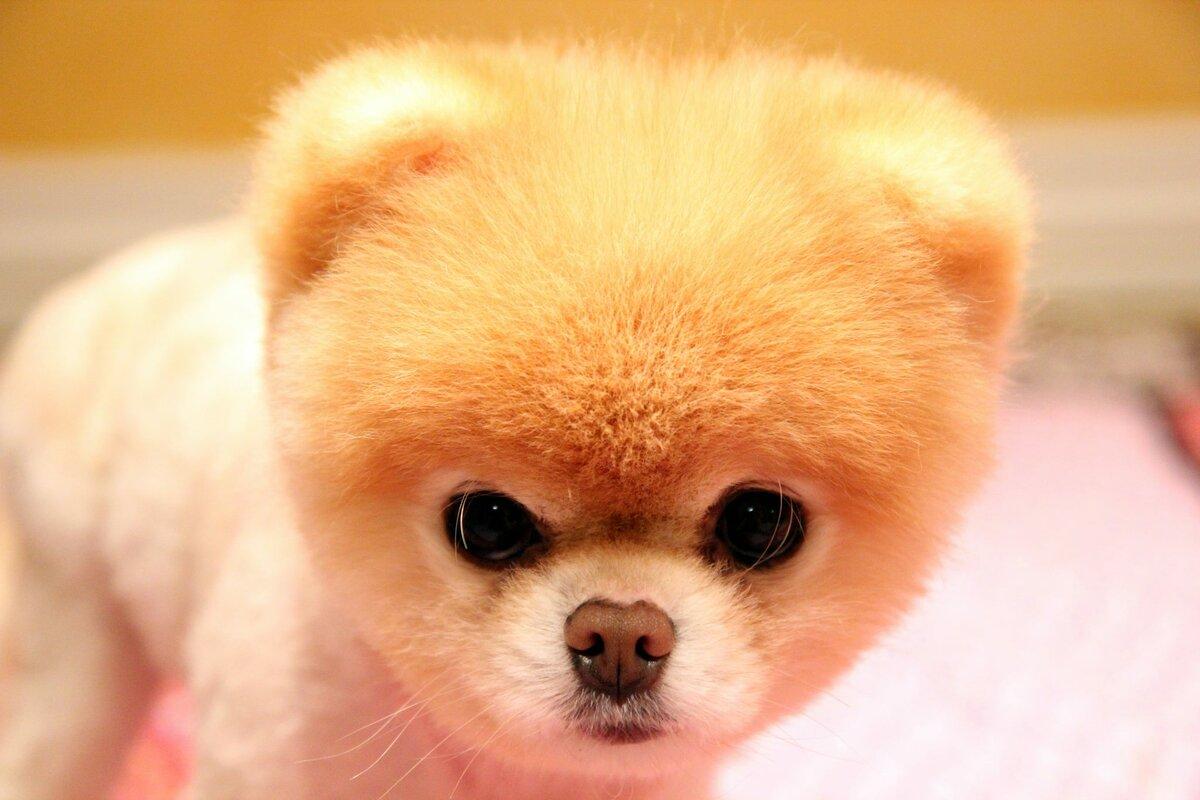 мимимишные фото собак гражданской