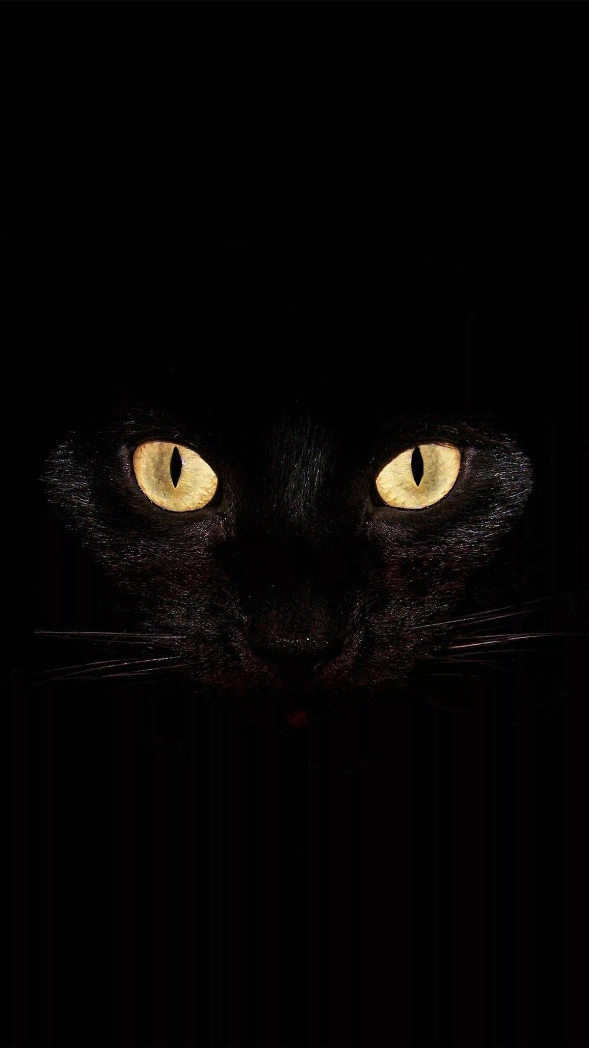 Обои вертикальные на телефон кошки черные