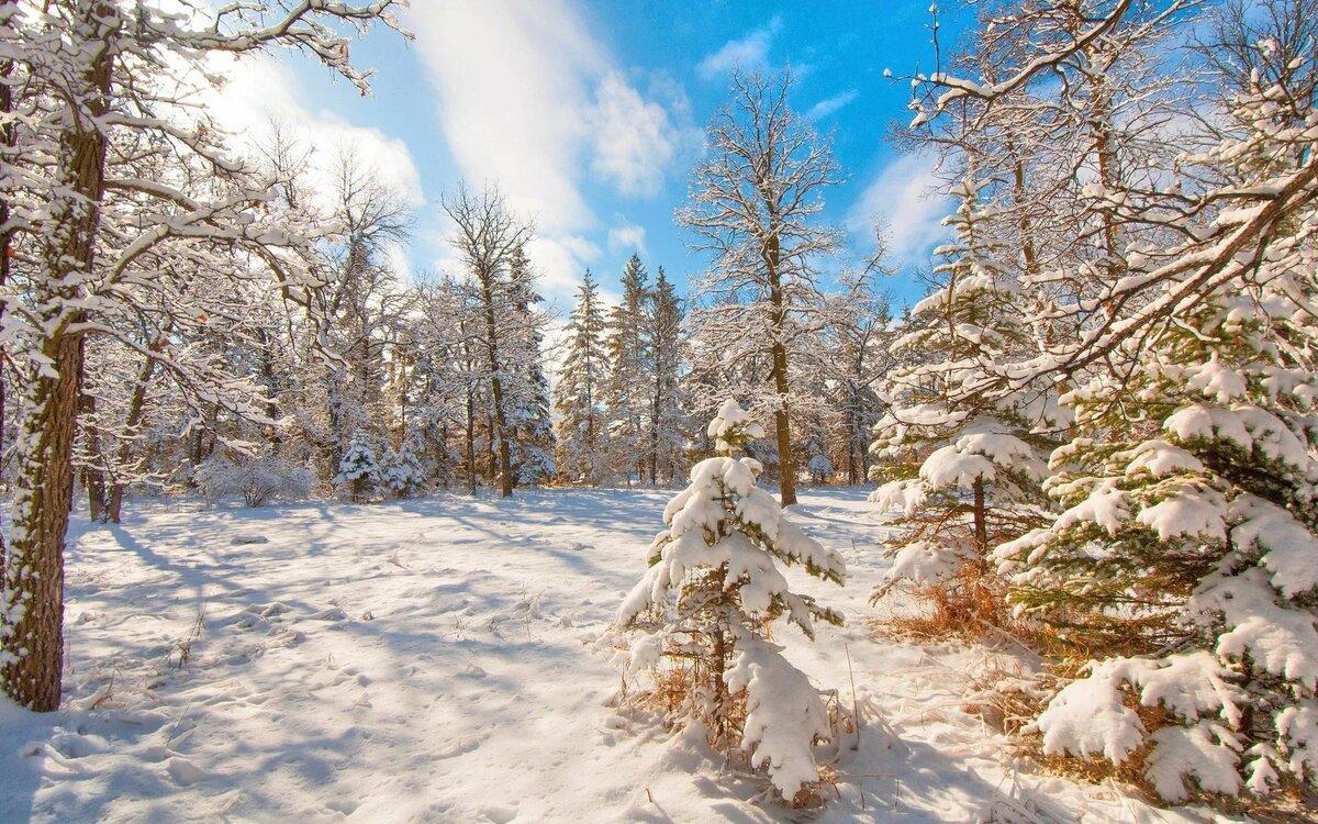 Картинка природа лес зима