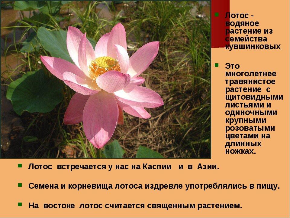 Растения из красной книги рф в картинках