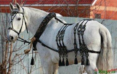 сбруя для лошадей