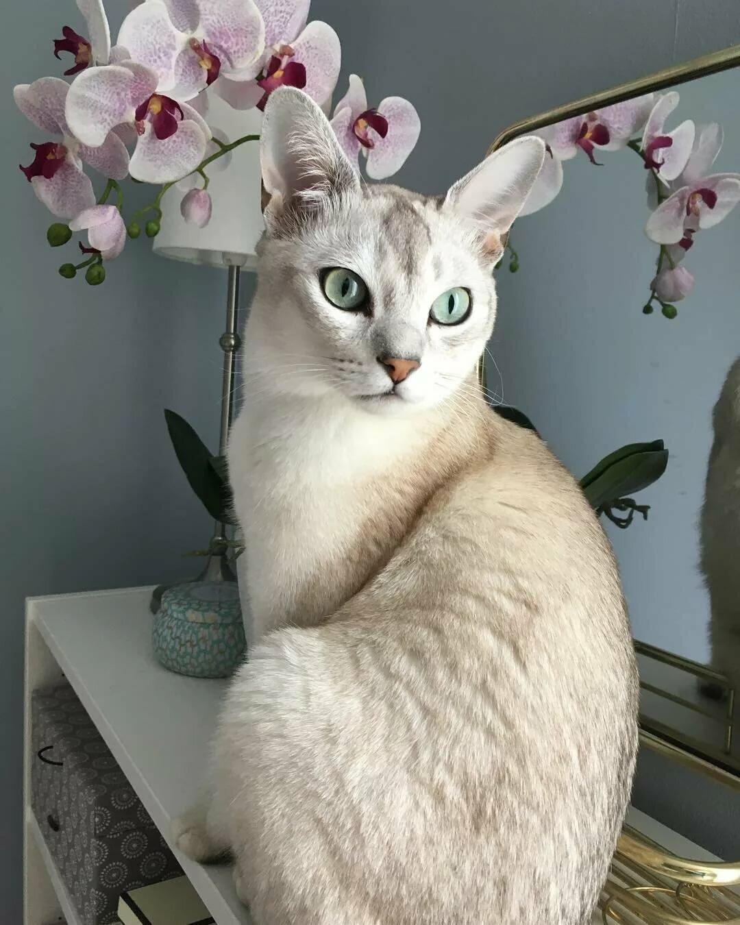 мультиварка самые красивые кошки найти фото наша