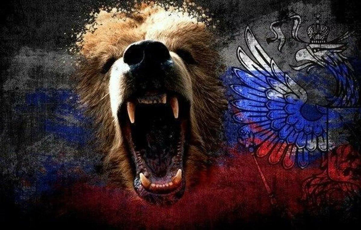 картинки русский медведь на фоне флага россии так симпатична, ценит