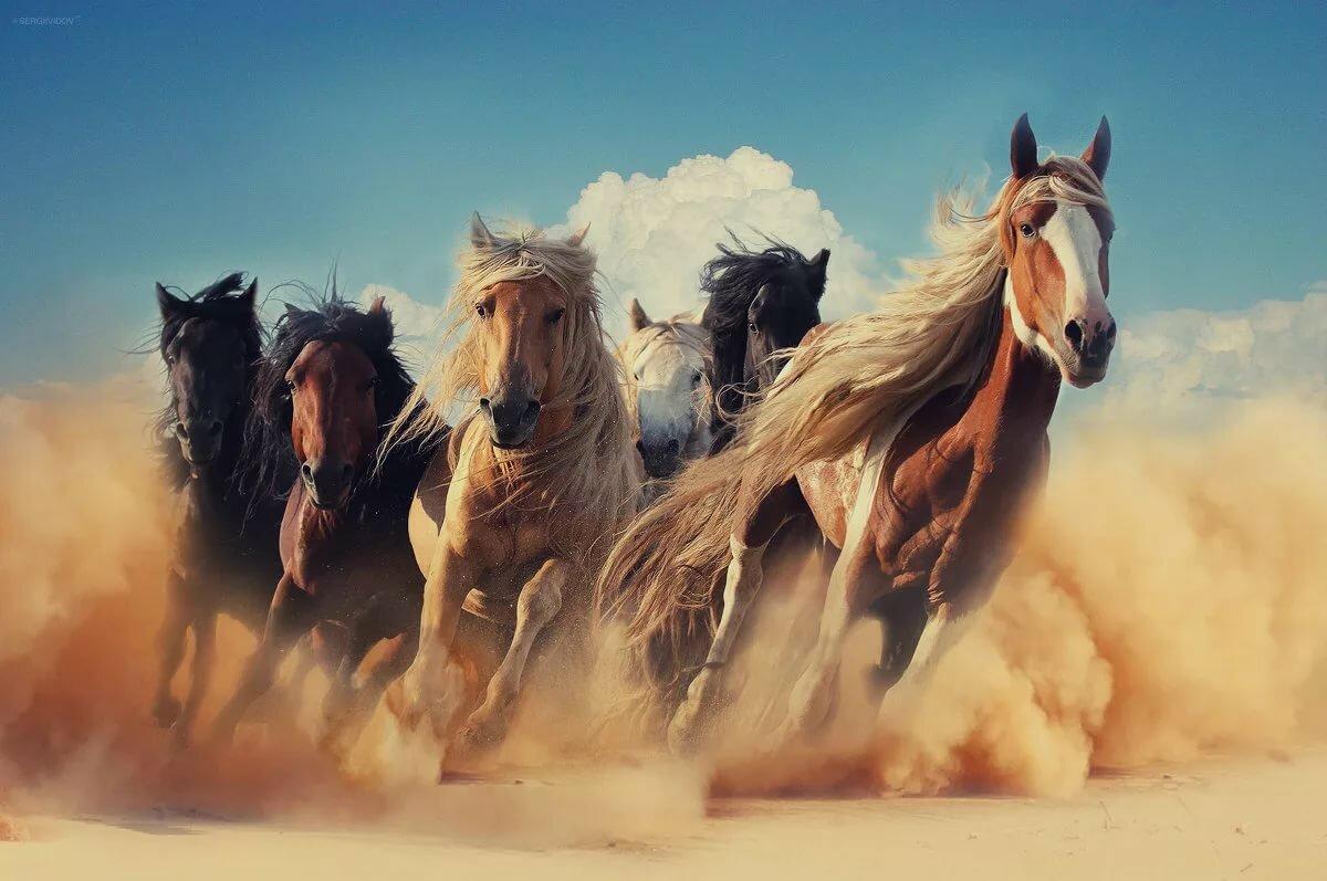 а кони все бегут картинки картинки тегом блестки