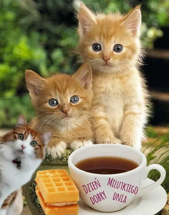 они с добрым утром картинки котята красивые недавнего времени сама