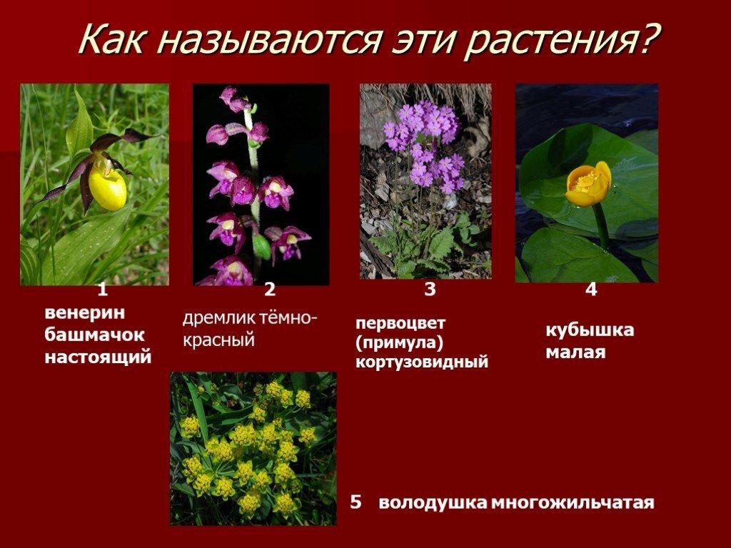 Растение красной книги россии картинки и названия