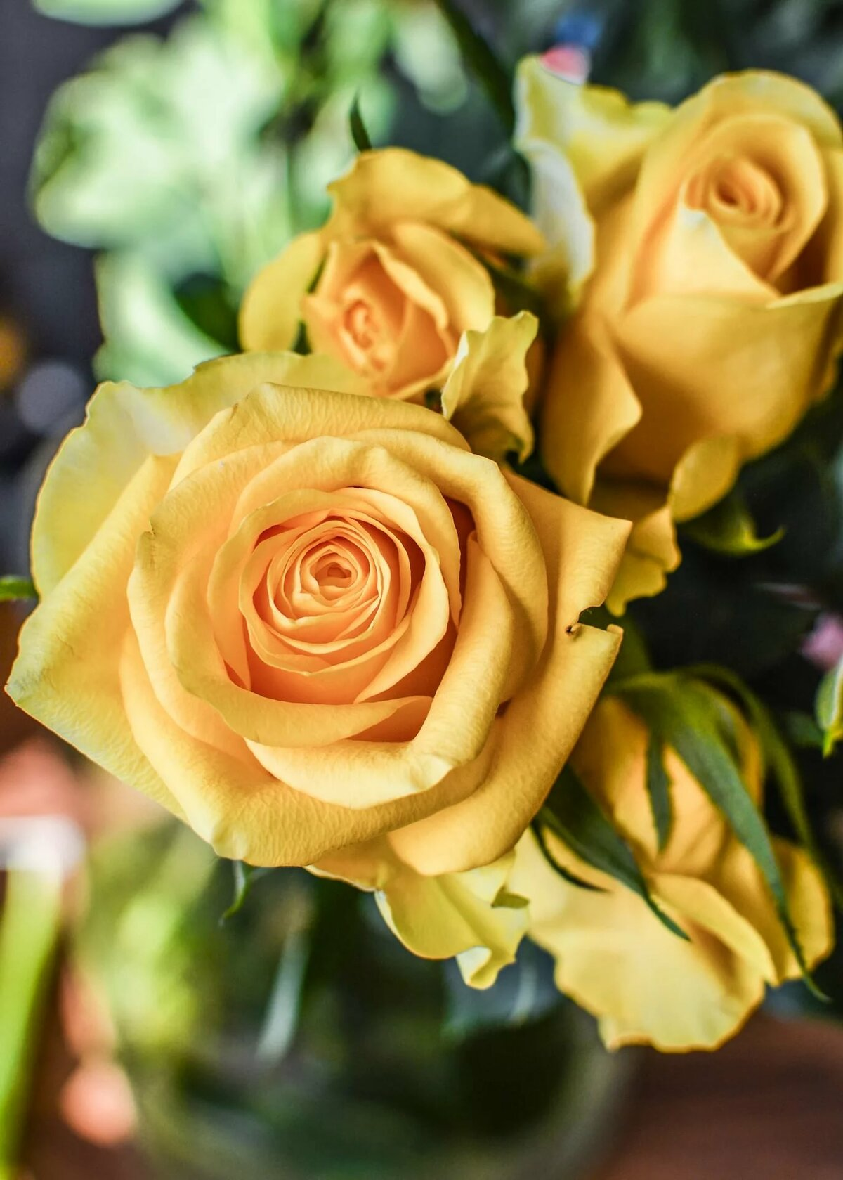 печатная желто-розовые розы картинки раз что