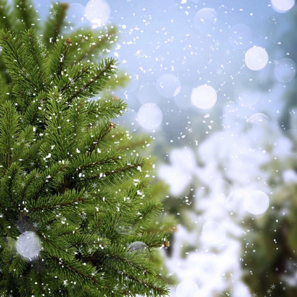 Елочка в снегу открытка