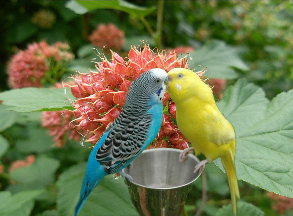 Дикие попугаи картинки