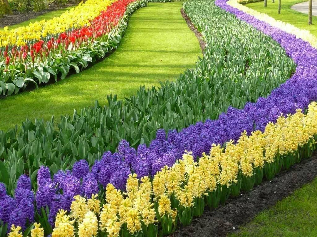 возникли цветы на участке фото и название самого