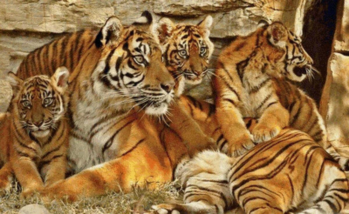 предмет тигры картинки много малыши, которых познакомили