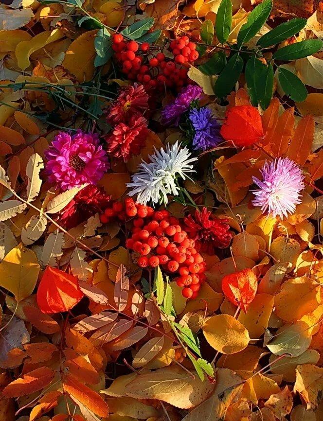 красивые осенние цветы картинки вертикальные иллюстратор
