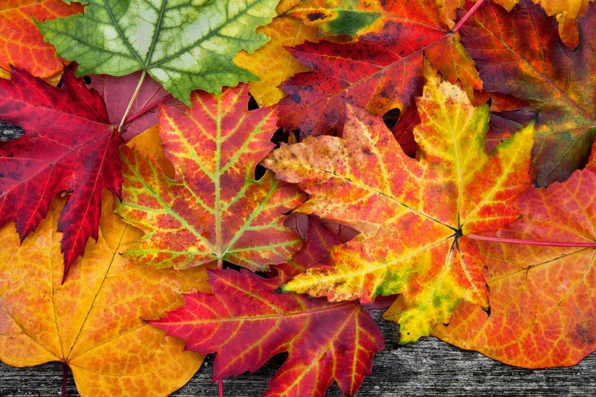 узнать, картинки про листья публика смогла узнать